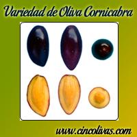 aceite-oliva-variedad-cornicabra-cincolivas_m